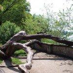vom Blitz getroffener Baum