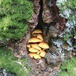 Pilze und Moos in einer Baumhöhle