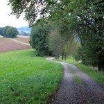Weg im Odenwald