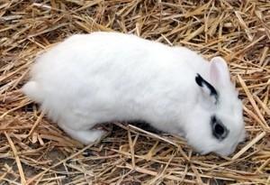 Kaninchen_im_Stroh