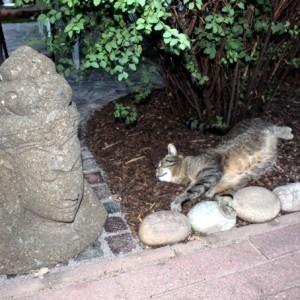Buddha mit Katze